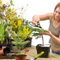 Комнатные растения — польза и вред