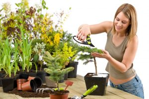 Комнатные растения - вред и польза