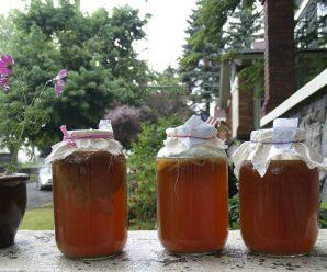 Чайный гриб: уход, польза, противопоказания